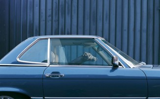 The Silence of Dogs in Cars by Martin Usborne (06)